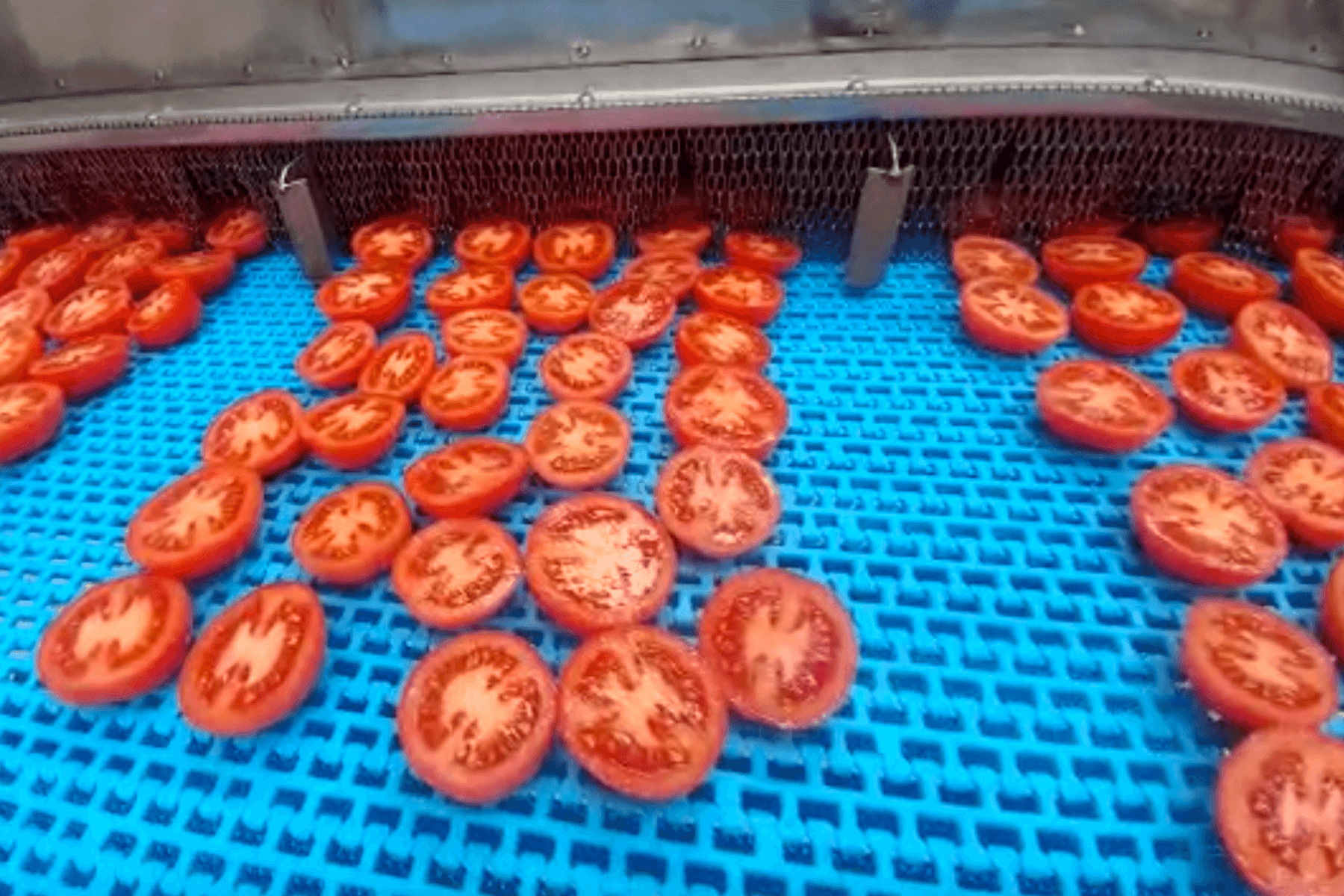 tomatoes entering microwave